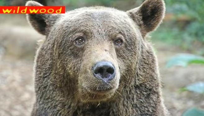 osos-liberados-16-años8