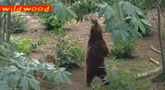 osos-liberados-16-años9