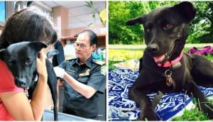 perrita-viaja-al-ser-adoptada-desde-tailandia