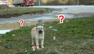 perrito desorientado 10