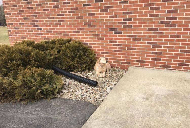 perro abandonado en iglesia 1