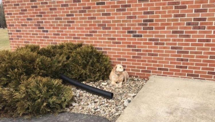 perro abandonado en iglesia encuentra hogar 1