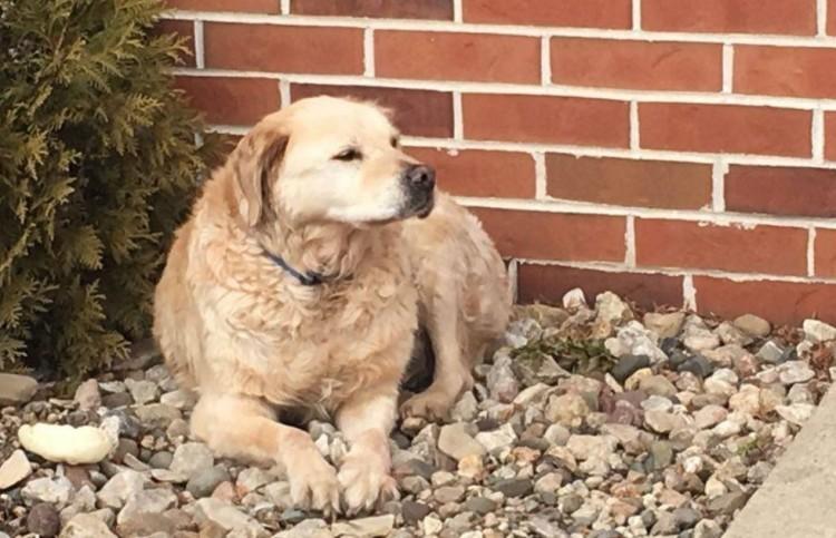 perro abandonado en iglesia encuentra hogar 3