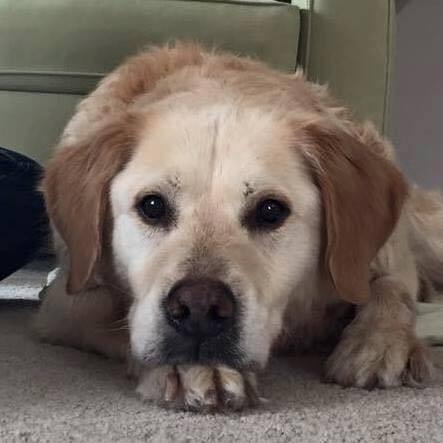 perro abandonado en iglesia encuentra hogar 4