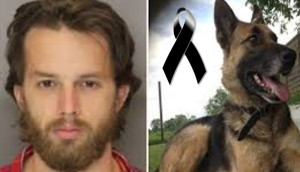 perro-asesinado-lanzado-por-balcon