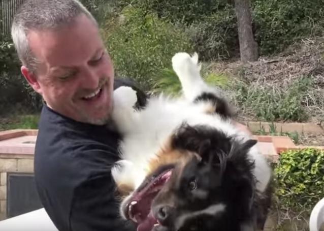 perro-con-dos-hocicos-rescatado3