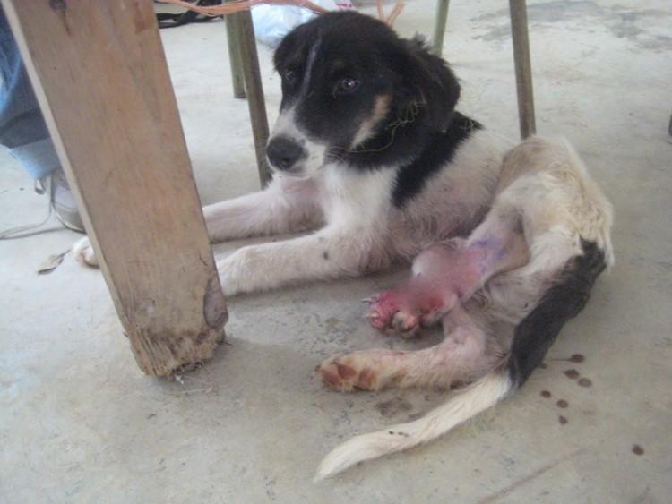 perro de tres piernas 1