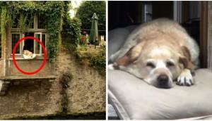 perro-fotos-homenaje