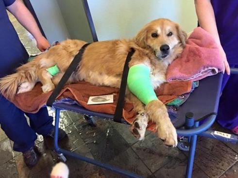perro-herido-movio-su-cola2