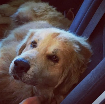 perro-herido-movio-su-cola3