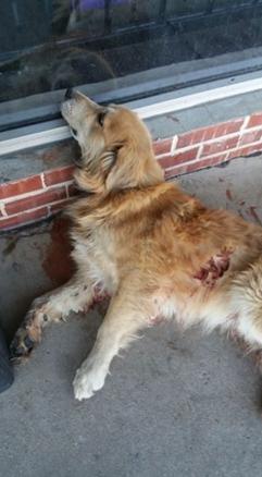 perro-herido-movio-su-cola5