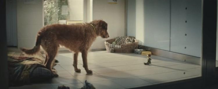 perro-que-no-se-separa-de-su-muñeco8