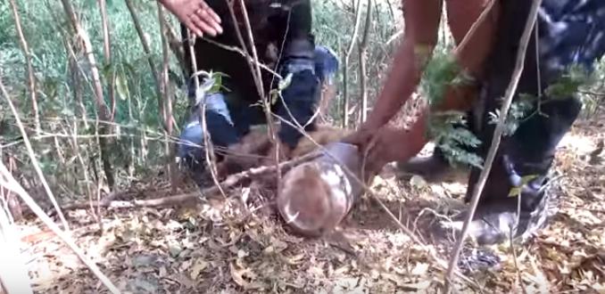 perro-rescatado-bosque4