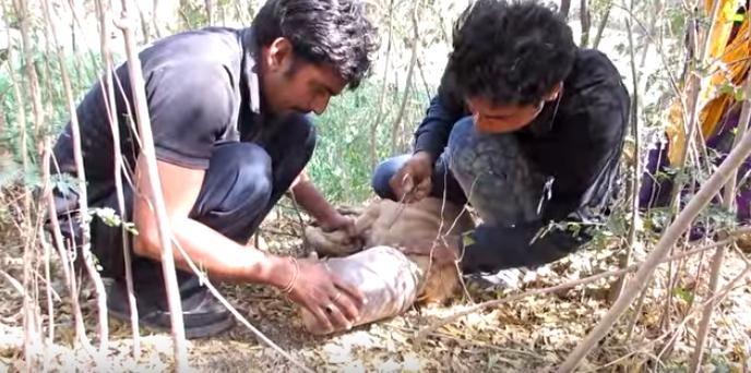 perro-rescatado-bosque7