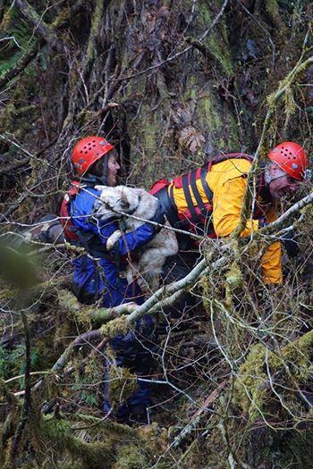 perro rescate del rio 4