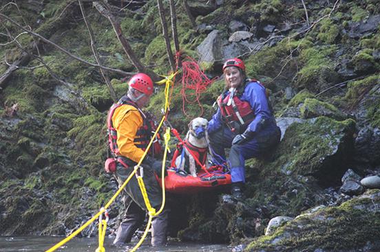perro rescate del rio 5