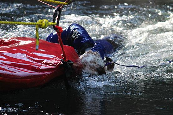 perro rescate del rio 6