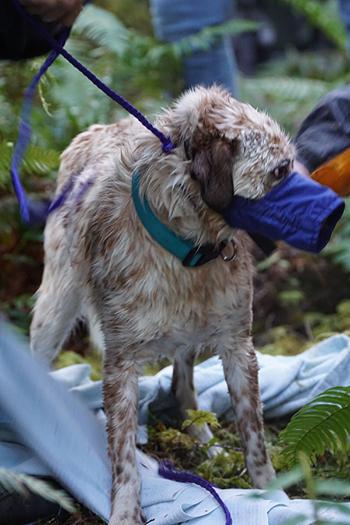 perro rescate del rio 9