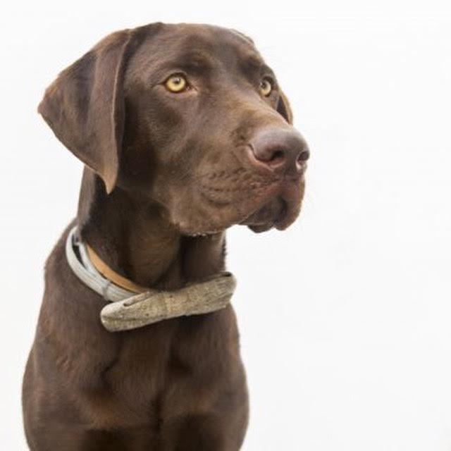 perro-salva-a-hombre-en-playa-de-malaga3