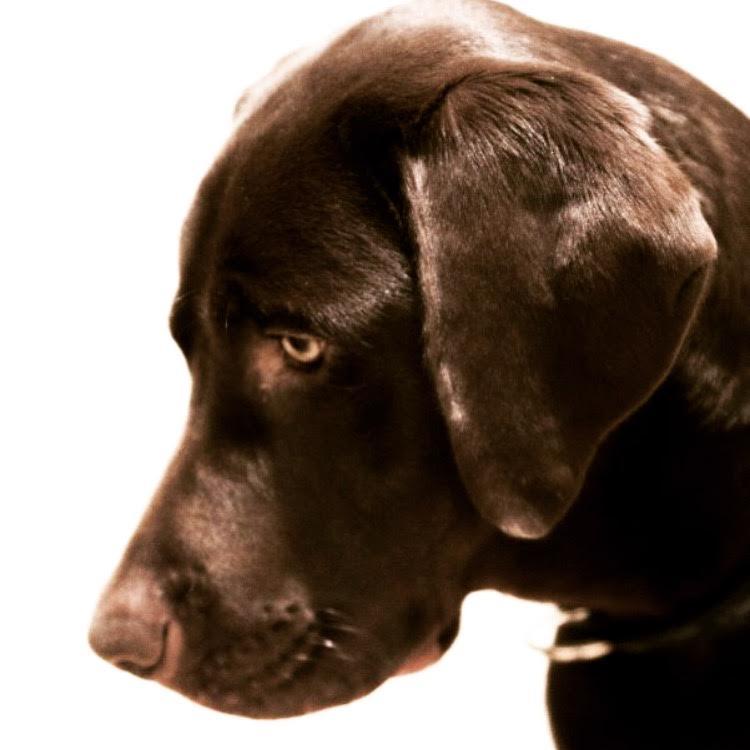 perro-salva-a-hombre-en-playa-de-malaga4