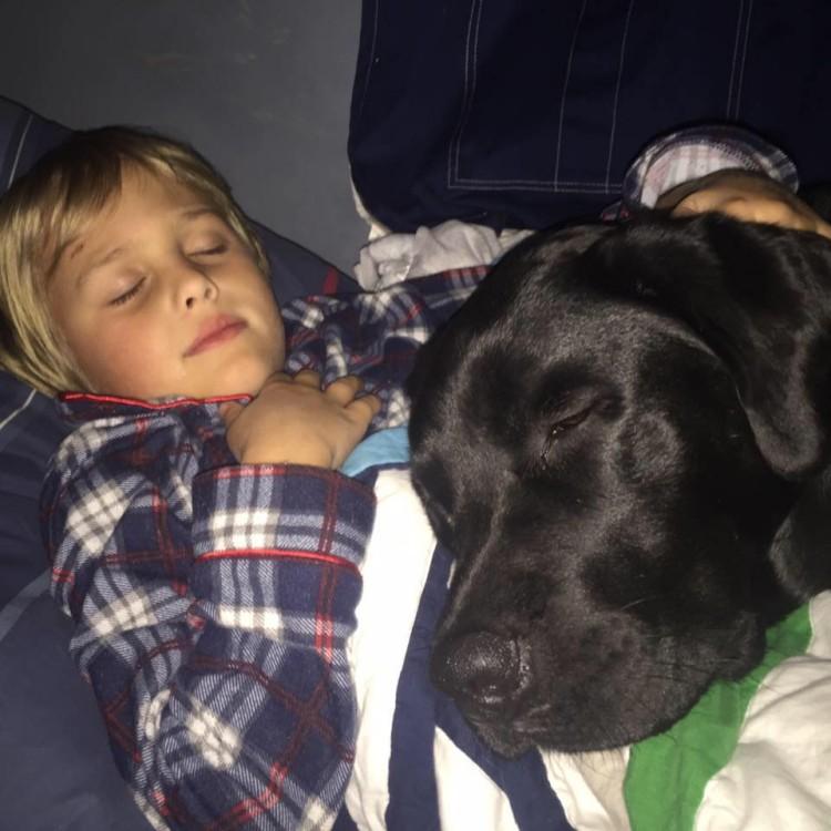 perro-salva-vida-de-nino-diabetico4