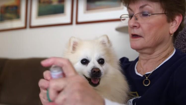 perros-ancianos-rescatados10