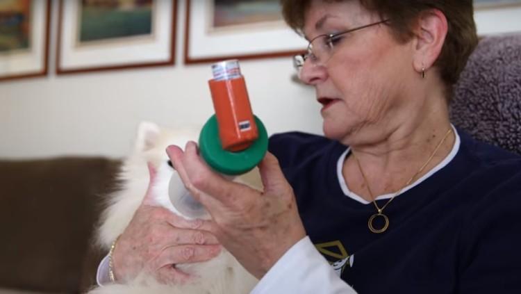 perros-ancianos-rescatados11