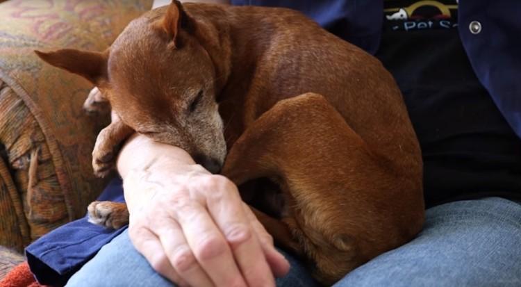 perros-ancianos-rescatados14