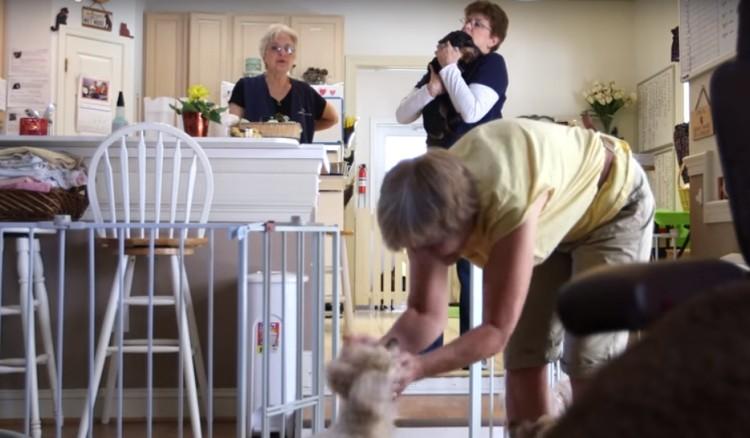 perros-ancianos-rescatados17