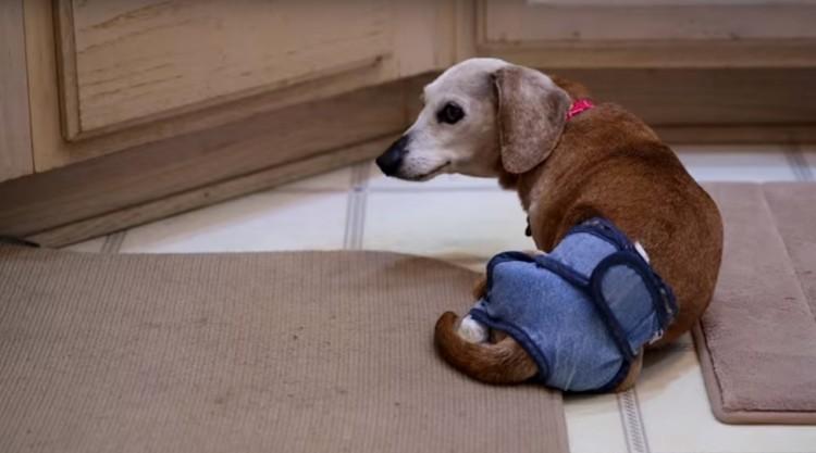 perros-ancianos-rescatados8