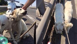 perros-rescatados-autopista