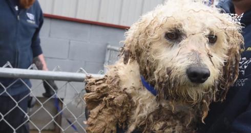 perros-rescatados-eeuu