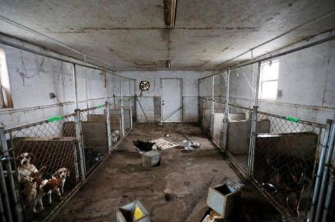 perros-rescatados-eeuu2
