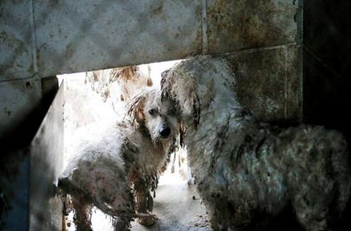 perros-rescatados-eeuu3