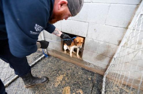 perros-rescatados-eeuu5