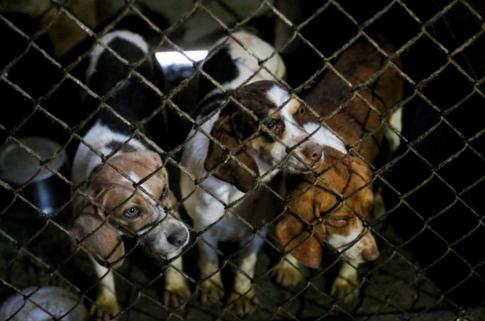 perros-rescatados-eeuu7