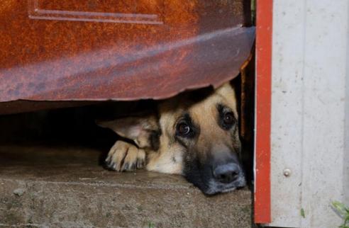 perros-rescatados-eeuu8