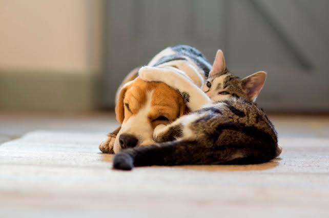 perros-y-gatos-declarados-vecinos-pueblo-espanol1