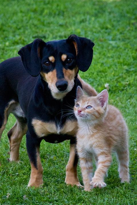 perros-y-gatos-declarados-vecinos-pueblo-espanol5