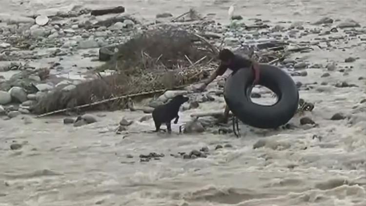 policia-rescata-perro-en-peru4