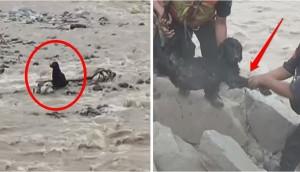 policia-rescata-perro-en-peru6