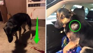 policias disparan a perro 7