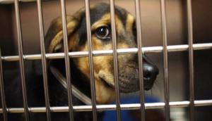 prohiben-venta-de-animales-en-boston - copia