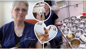 refugio-para-perros-ancianos