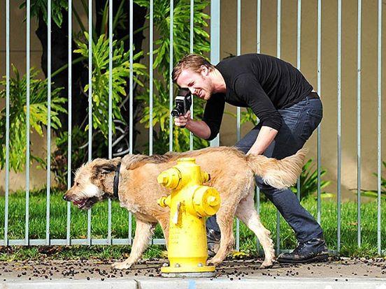 ryan gosliin ayuda perro 4