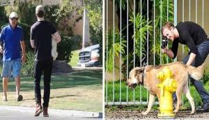 ryan gosliin ayuda perro portada