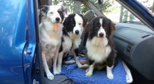 su-ultimo-deseo-es-un-hogar-para-sus-tres-perros1