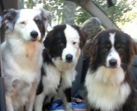 su-ultimo-deseo-es-un-hogar-para-sus-tres-perros7