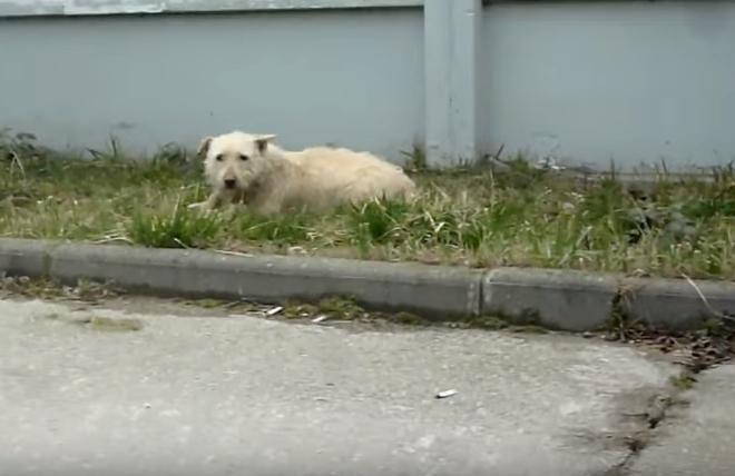 transformacion-perro-rescatado1