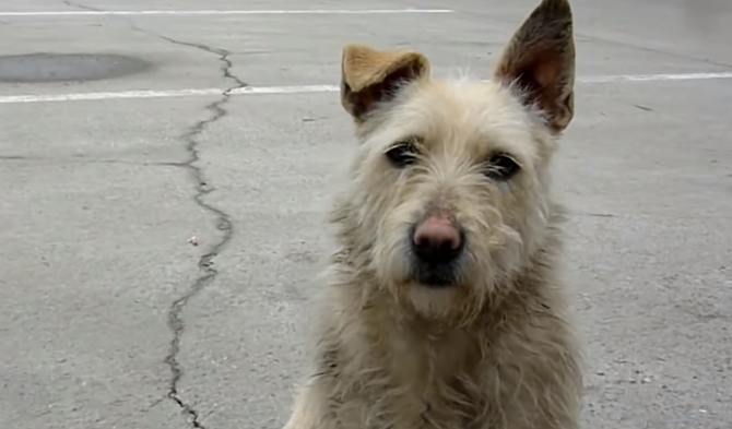 transformacion-perro-rescatado10